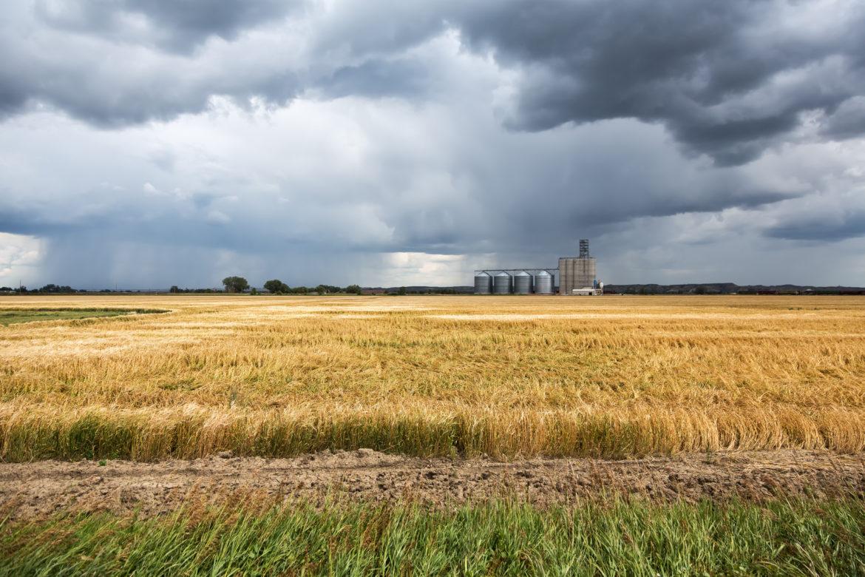 Montana Crops Get Covid Bump  Questions