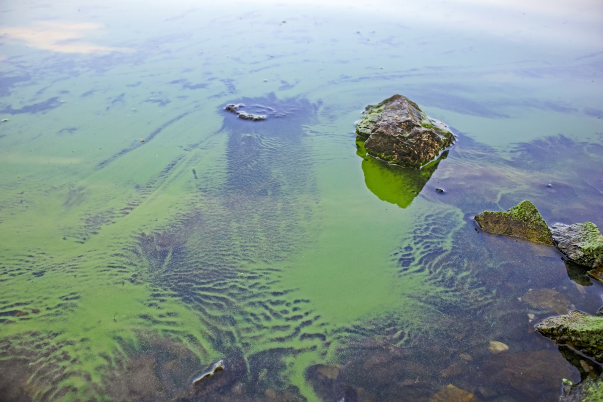 water quality algae