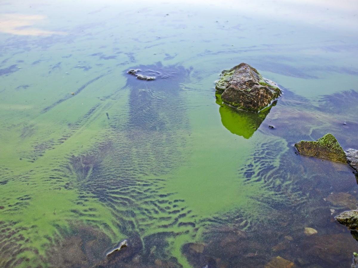 water quality algae