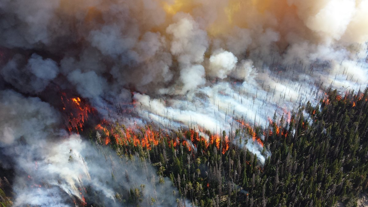 Druid complex fire 2013